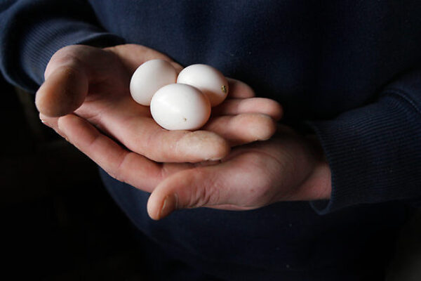 Holding and Switching Eggs