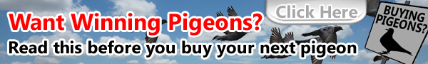 Buying pigeons? read this before you do.