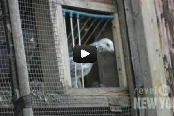 Meet The Pigeon Lady