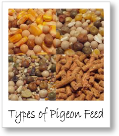 Grains, Fuel and Pigeon Racing Introduction