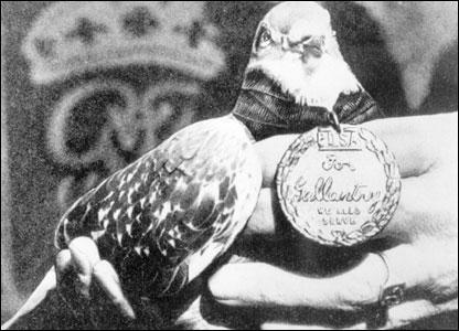 Famous Pigeons
