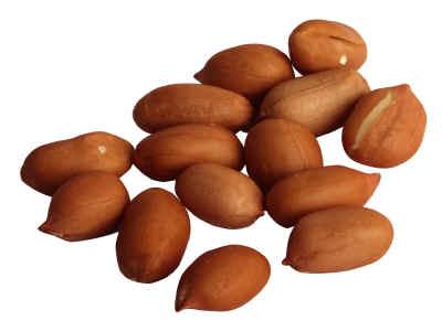 Pigeon Feeding Schedule Utilizing Raw Peanuts