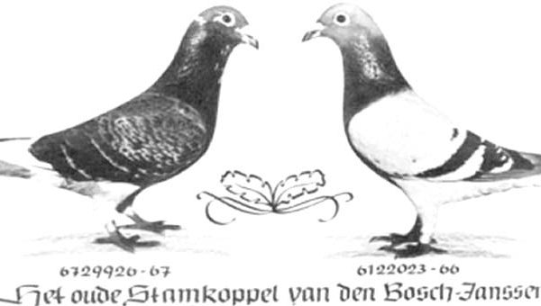 Factoring Genetics Example – The Meulemans Pigeons