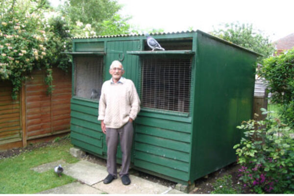 Tiny loft… Fascinating pigeon racing method