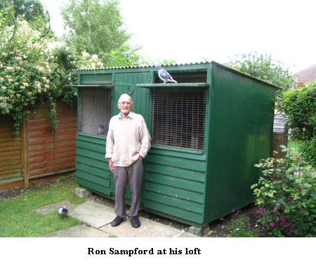 Pics For Gt Homing Pigeon Loft