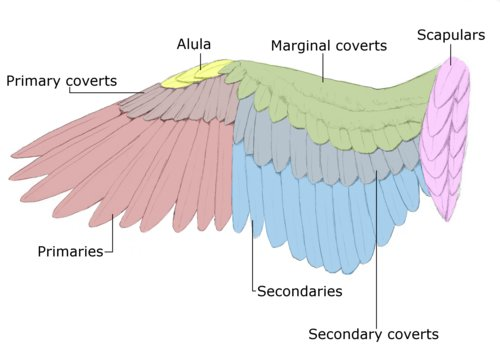 Structure of the wing (10) (AA)