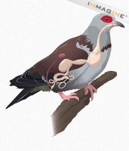 Pigeon Digestion