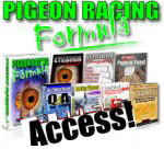 Pigeon racing formula access!