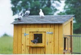 Pigeon Training Methods