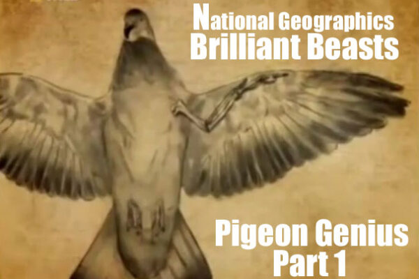 Brilliant Beasts: Pigeon Genius Part 1/4
