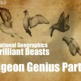 National Geographic – Brilliant Beasts: Pigeon Genius Part 2/4 This is part 2 of a brilliant series from National Geographic called Brilliant Beasts: Pigeon Genius. This series showcases how amazing […]