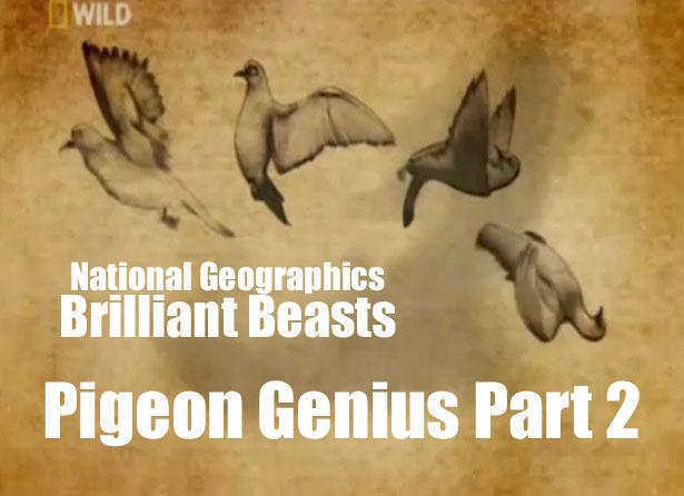 Brilliant Beasts: Pigeon Genius Part 2/4