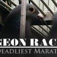 In April 2012, PETA released a 15-month undercover investigation—spanning five states—into some of the largest pigeon-racing operations in the U.S. PETA documented massive casualties of birds during races and […]