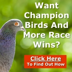 The new pigeon racing blueprint. One stop resource for creating a winning team. Download now.