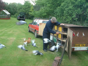 compass training your racing pigeons