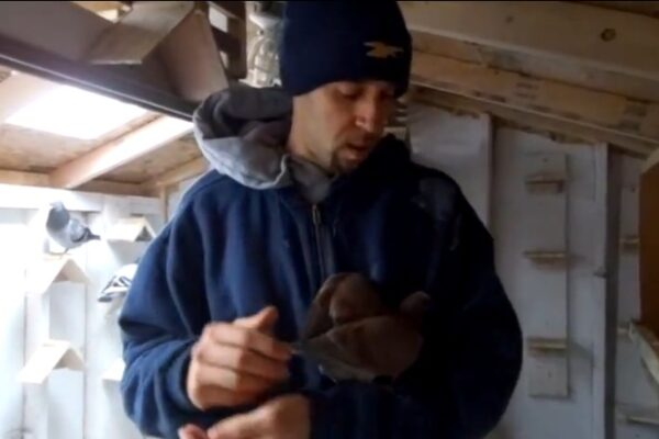 *Video* Tour of a Pigeon Racing Loft