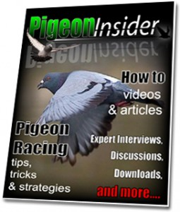 pigeon-insider-cover