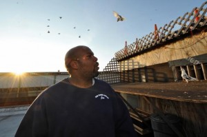 New York Pigeon Racing Heritage 3