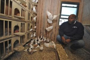 New York Pigeon Racing Heritage 7