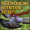 Pigeon racing nutrition secrets exposed.