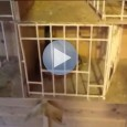*Video* Motivation Technique for Your Racing Pigeons by Terry Moore Here is a fantastic video from one of our resident pigeon racing experts Terry Moore. In this video Terry shows […]