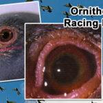 Ornithosis