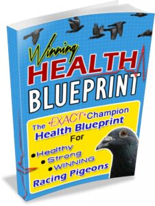 Pigeon Health Blueprint