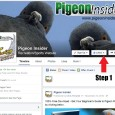 Did you know that there is exclusive pigeon racing tips, tricks, techniques and strategies that you may be missing? But don't worry because today I'm going to show you how […]