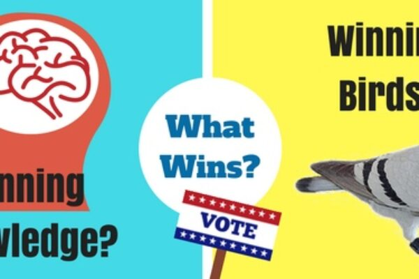 Vote Now: Winning Knowledge -VS- Winning Birds