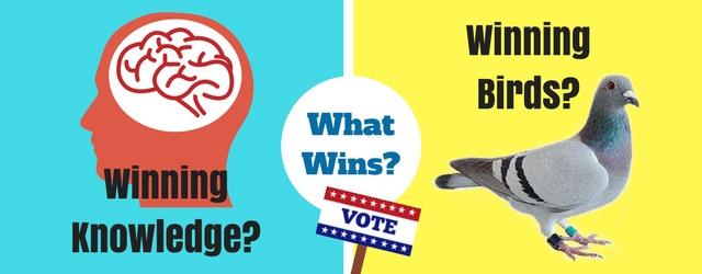 Vote Now: Winning Knowledge -VS- Winning Birds