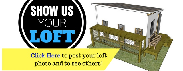 Show Off Your Racing Pigeon Loft