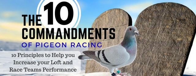 Pigeon Racing – 10 Commandments to Increase Your Lofts Performance